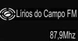 Rádio Lírios do Campo FM