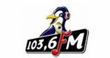 Pinguin Fm