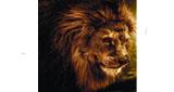 Solace Radio