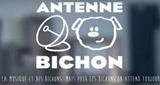 Antenne Bichon